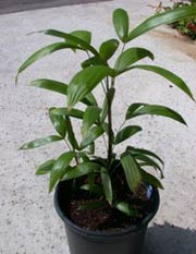 Домашние растения продам